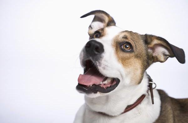 Ako získať pozornosť Vášho psa