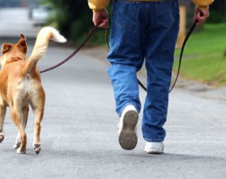 Chôdza pri nohe psovoda